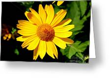 Yellow Daisey Greeting Card