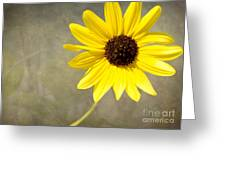 Yellow Daisy By Darrell Hutto Greeting Card