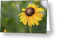 Yellow Daisy II Greeting Card
