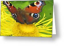 Yellow Daisy With Butterfly Greeting Card