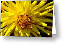 Yellow Daliha Greeting Card