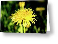 Yellow Dandelion Flower Greeting Card