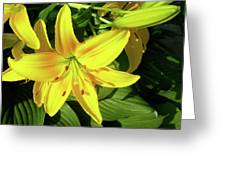 Yellow Day Lilies Greeting Card