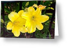 Yellow Day Lilys Greeting Card