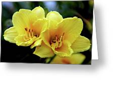 Yellow Daylilly 0204 H_2 Greeting Card