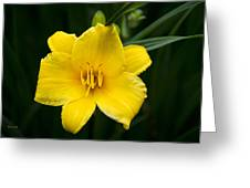 Yellow Daylily Flower Greeting Card
