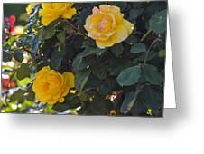 Yellow Daze Greeting Card