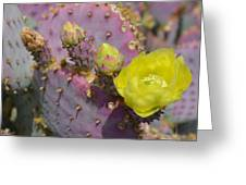 Yellow Desert Bloom Greeting Card