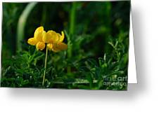 Yellow Dew Drops Greeting Card