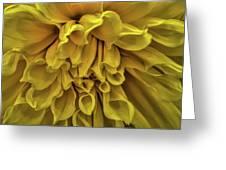 Yellow Dinner Plate Dahlia Greeting Card