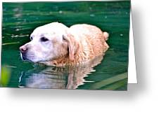 Yellow Dog In Pond Greeting Card