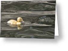 Yellow Duckling Greeting Card