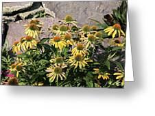 Yellow Echinacea, Straw Flowers Gray Stone Background 2 9132017  Greeting Card