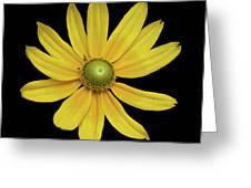 Yellow Eyed Daisy In Black Greeting Card