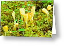 Yellow Fairy Fan Mushrooms Spathularia Flavida Greeting Card