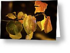 Yellow Fall Leaves Greeting Card