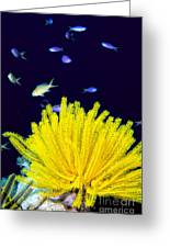 Yellow Feather Star Greeting Card