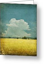 Yellow Field On Old Grunge Paper Greeting Card by Setsiri Silapasuwanchai