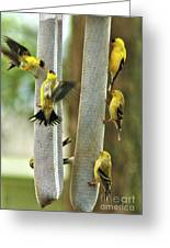 Yellow Finch Feeding Frenzy Greeting Card
