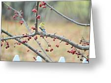 Yellow Finch In Crab Apple Tree Greeting Card