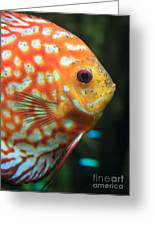 Yellow Fish Profile Greeting Card