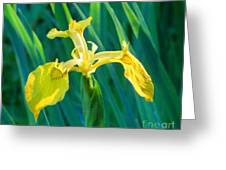 Yellow Flag Wildflower Greeting Card