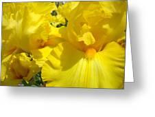Yellow Floral Irises Flowers Art Prints Baslee Troutman Greeting Card