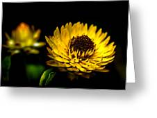 Yellow Flower 5 Greeting Card
