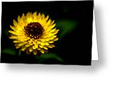 Yellow Flower 6 Greeting Card