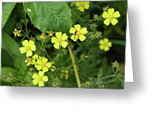 Yellow Flower And A Black Bug  Greeting Card