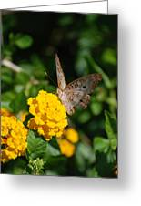 Yellow Flower Brown Fly Greeting Card