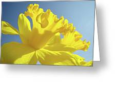 Yellow Flower Floral Daffodils Art Prints Spring Blue Sky Baslee Troutman Greeting Card