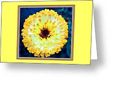 Yellow Flower H B With Decorative Ornate Printed Frame Greeting Card