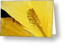 Yellow Flower - Hibiscus Shadow - Sharon Cummings Greeting Card
