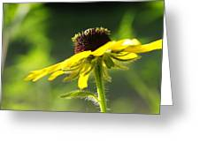 Yellow Flower In Sunlight Greeting Card