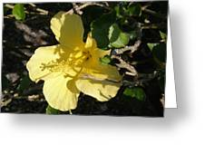 Yellow Flower In The Shade Greeting Card
