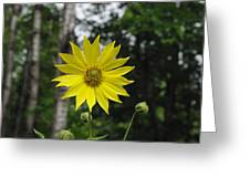 Yellow Flower In Woods Greeting Card