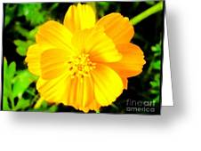 Yellow Flower On Black Background Greeting Card