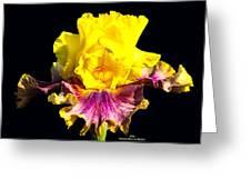 Yellow Flower On Black Greeting Card