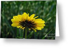 Underside, Petals, Yellow Greeting Card