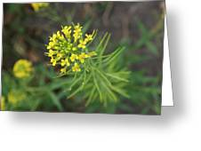 Yellow Flower Weed Greeting Card