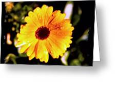 Yellow Flower With Rain Drops Greeting Card