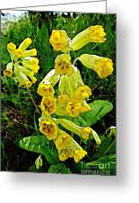 Yellow Flowers 2 Greeting Card