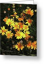 Yellow Flowers At Boyce Thompson Arboretum Greeting Card