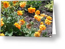 Yellow Flowers Bushes Greeting Card