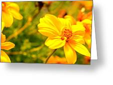 Summers Glory In Bloom By Earl's Photography Greeting Card