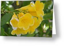 Yellow Freesias Greeting Card