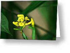 Yellow Flowers I Greeting Card