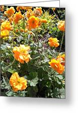 Yellow Flowers In May Greeting Card