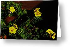 Yellow Flowers In The Sun Greeting Card